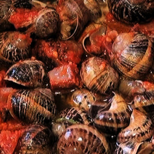 Madrid snails