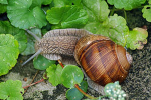 Nutrition of snails in the nature
