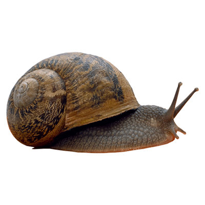 advantages-of-snails-cultivation