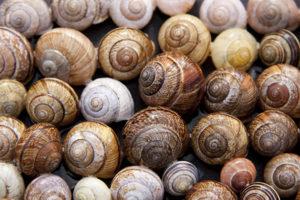 Favorite food of grape snails