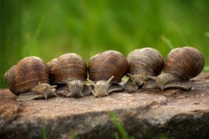 Myths about snails