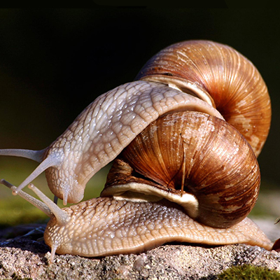 Myths about snails