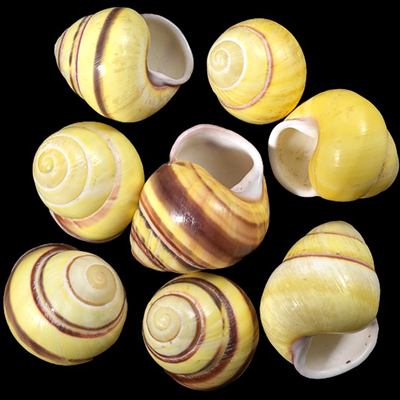Siedliska dla różnych gatunków ślimaków