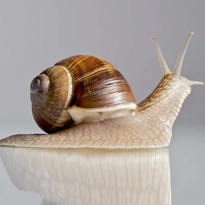 CURATIVE SNAIL MUCIN IS A PLEDGE OF THE YOUTH AND BEAUTY OF THE SKIN