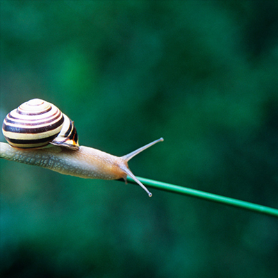 Snails are useful for the environment